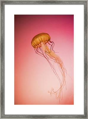 Red Jellyfish Framed Print
