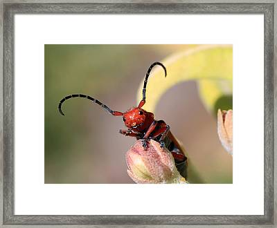 Red Jester Framed Print
