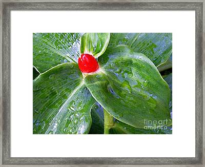 Red Jewel Framed Print by James Temple