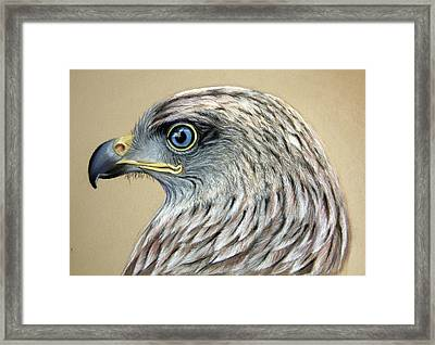 Red Kite Framed Print by Mary Mayes