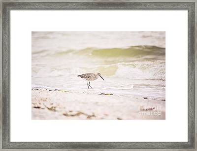 Red Knot Foraging In The Surf Framed Print by Scott Pellegrin