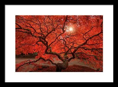 Bonsai Tree Framed Prints
