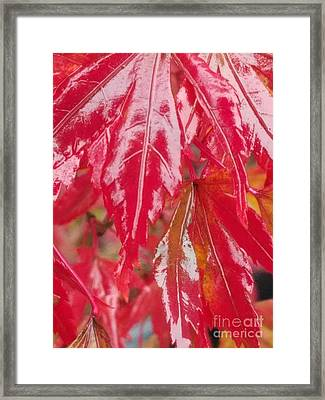 Red Leaf Abstract Framed Print