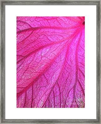 Red Leaf Arteries Framed Print