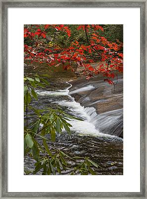 Red Leaf Falls Framed Print