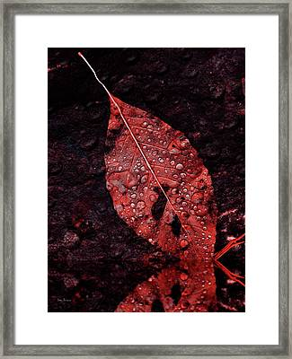 Red Leaf In The Rain Framed Print