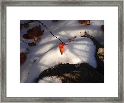 Red Leaf Framed Print by Marilynne Bull