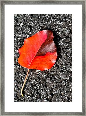 Red Leaf On Asphalt Framed Print by Douglas Barnett