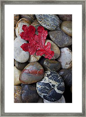Red Leaf Wet Stones Framed Print by Garry Gay