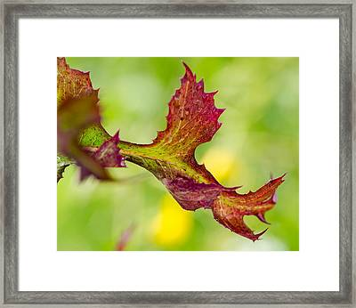 Red Leaf With Green Background Framed Print