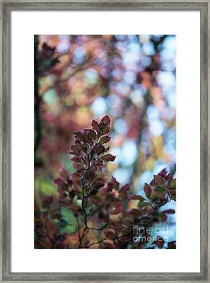 Red Leaves Abstract Framed Print