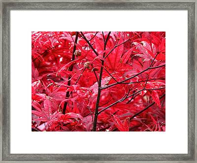 Red Leaves And Stems 2 Pd Framed Print by Lyle Crump