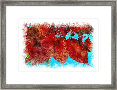 Framed Print featuring the photograph Red Leaves by Jean Bernard Roussilhe