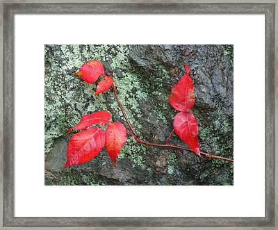 Red Leaves Framed Print by Juergen Roth