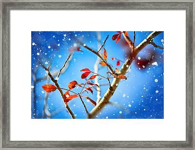Red Leaves On Blue Background Framed Print