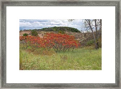 Red Leaves On Grassy Dunes Framed Print