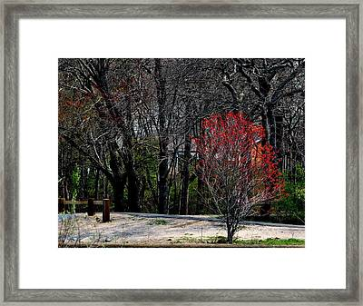 Red Leaves On Tree Framed Print by Robert Scauzillo