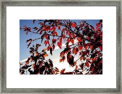 Red Leaves Part 1 Framed Print by Joseph Peterson