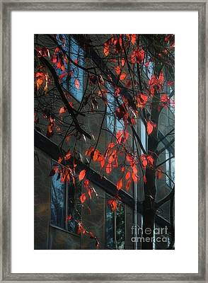 Framed Print featuring the photograph Red Leaves by Yulia Kazansky