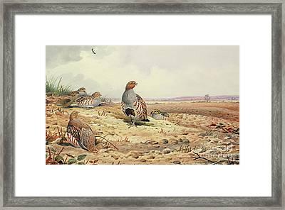 Red Legged Partridge Framed Print by Carl Donner