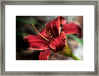 Red Lilly Framed Print