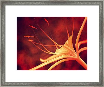 Red Lilly  Framed Print by Susanne Van Hulst