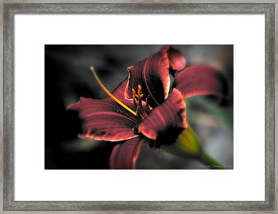 Framed Print featuring the photograph Red Lilly2 by Michaela Preston