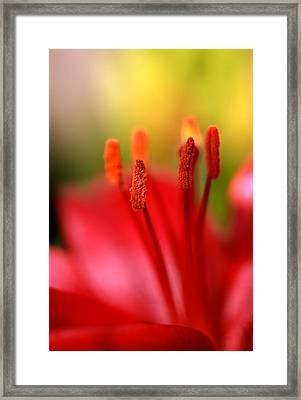 Red Lily Abstract One Framed Print by Tony Ramos