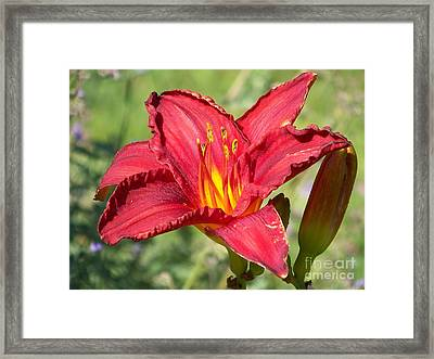 Framed Print featuring the photograph Red Flower by Eunice Miller
