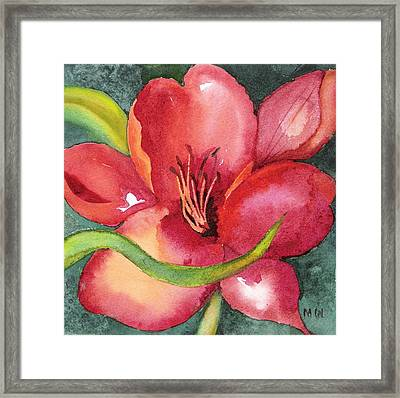 Red Lily Framed Print by Marsha Woods