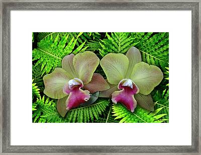 Red Lips On Ferns Framed Print by Terry Bottom