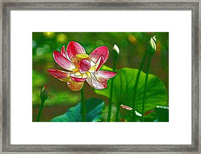 Red Lotus Flower Blossom Framed Print by Lanjee Chee