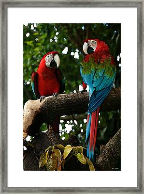 Red Macaws Framed Print by Bibi Romer