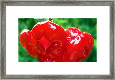 Red Malay Apple Framed Print by LeoLeo Khm