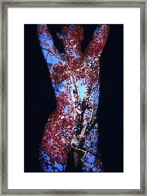 Red Maple Framed Print by Arla Patch