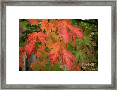 Red Maple Eye Magnets Fall Leaf Art Framed Print