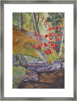 Red Maple Leaves Framed Print by Debbie Homewood