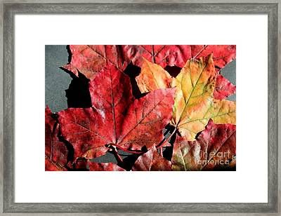 Framed Print featuring the photograph Red Maple Leaves Digital Painting by Barbara Griffin