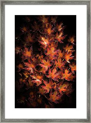 Red Maple Leaves Framed Print by Louis Dallara