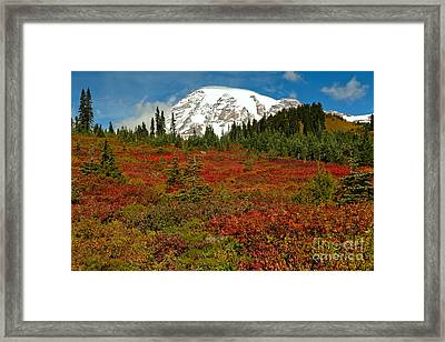 Red Meadows At Paradise Framed Print