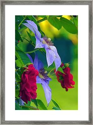 Red Meets Lavender Framed Print