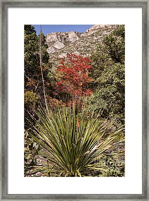 Red Framed Print by Melany Sarafis