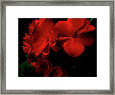 Red  Midnight Magic Flowers Framed Print