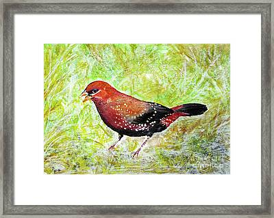 Red Munia Framed Print by Jasna Dragun