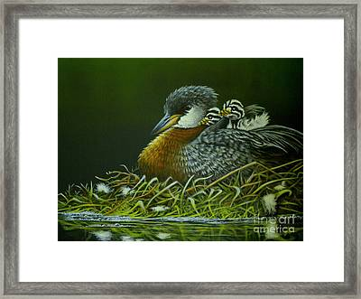 Red Necked Grebe Framed Print by Greg and Linda Halom