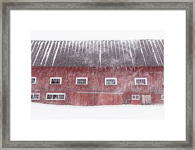 Red New England Cow Barn On Dairy In Winter Storm Framed Print