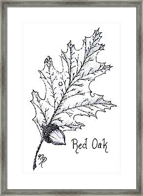 Red Oak Leaf And Acorn Framed Print