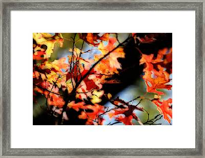 Red Oak Leaves In Fall Framed Print by Linda Phelps