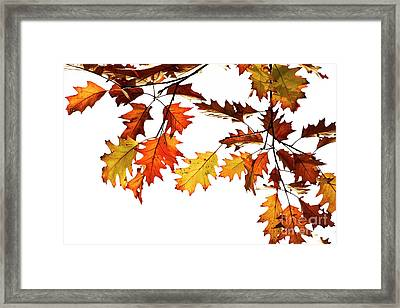 Red Oak Leaves In Fall Framed Print by Tim Gainey