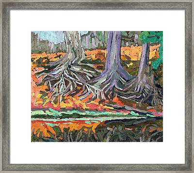 Red Oak Roots Framed Print by Phil Chadwick